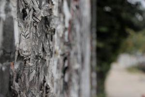 woman walking person sidewalk wall