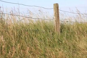 wood windy grass field daytime wire fence
