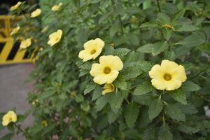 yellow flower flowers flower yellow flowers