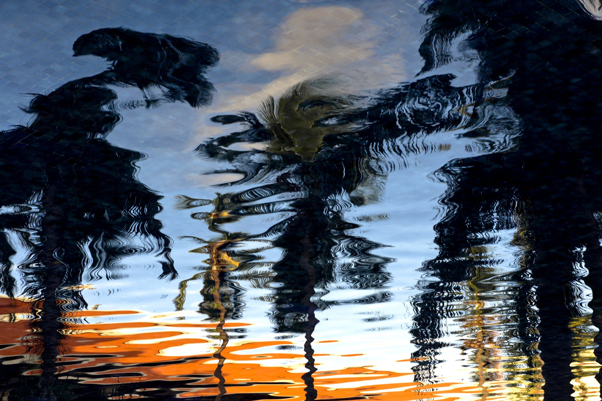 water ripple reflection palm trees trees