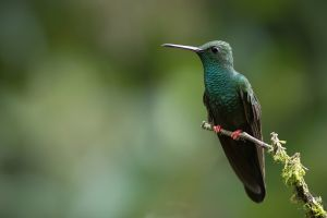animals colibri (bird) birds