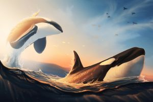 artwork birds whale mammals sea animals orca nature