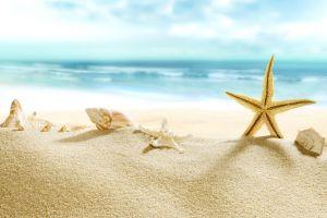 beach seashell sand
