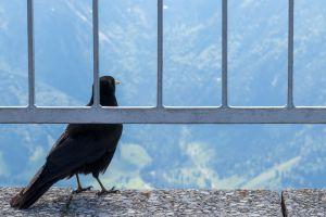 birds fence nature