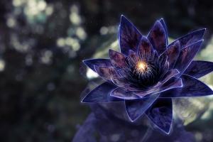 blue flowers digital art flowers plants lotus flowers