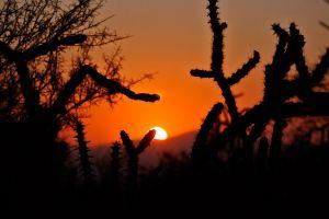 cactus silhouette sunrise nature