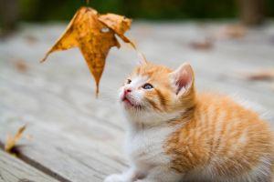 cats kittens leaves mammals animals