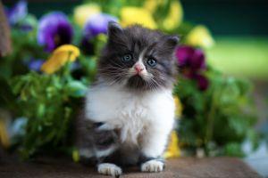 cats mammals kittens flowers baby animals