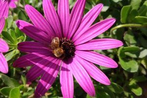 dappled sunlight animals shades purple flowers flowers bees nature