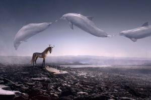 digital art sky dolphin landscape artwork animals fantasy art