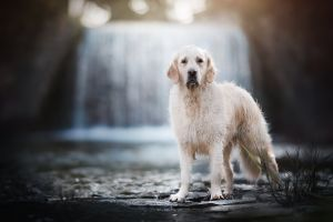 dog mammals animals outdoors
