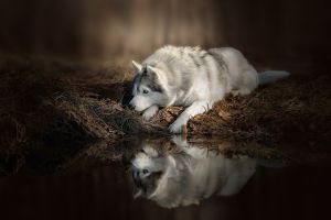 dog reflection animals water