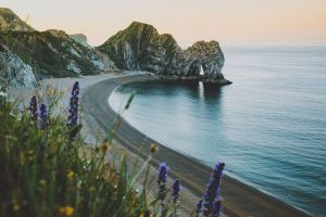 durdle door cliff beach flowers outdoors plants sea coast