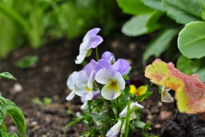 flowers leaves bokeh dirt macro nature