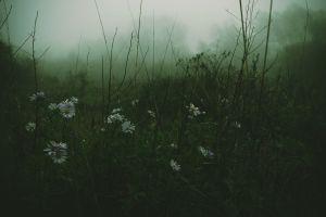 flowers mist forest grass