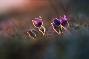 flowers plants purple flowers blurred outdoors
