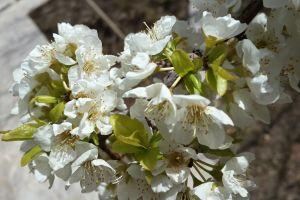 flowers plants white flowers