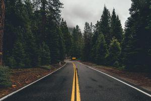 forest asphalt landscape wet road road trees sign
