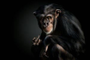 fuck monkey animals apes mammals