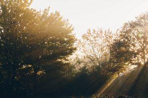 garden sunlight trees plants