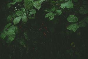 grass berries forest