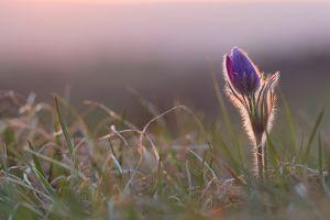 grass flowers plants purple flowers