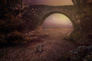 grass nature forest bridge fox cubs  landscape