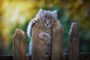 kittens mammals cats outdoors animals