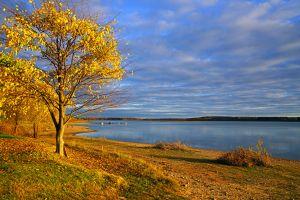 lake trees russia fall nature
