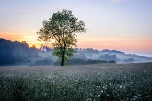 landscape sky morning field sunlight