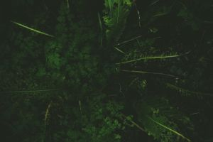 leaves grass forest plants green
