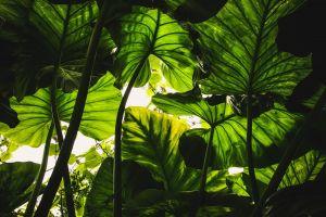 macro green plants leaves dark