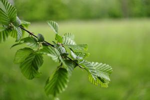 macro nature bokeh leaves grass