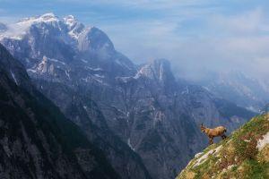 mammals animals nature mountains rock