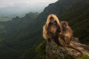 mammals apes nature mountains outdoors animals landscape