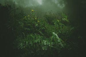 mist flowers forest grass