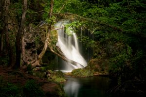 nature forest waterfall river