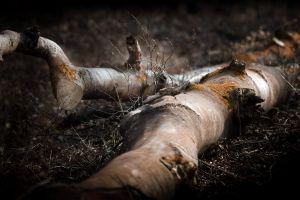nature outdoors dark wood
