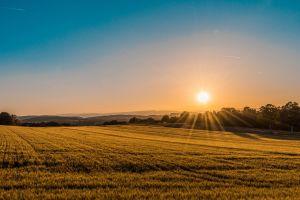 nature sunset yellow
