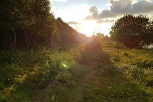 nature trees denmark sunset outdoors plants