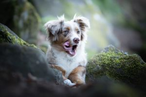 outdoors mammals tongue out animals dog