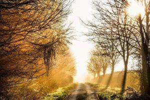 outdoors sunlight dirt road road trees fall