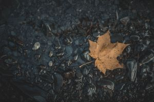photography leaves wet stones fallen leaves nature