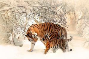 photoshop snow tiger