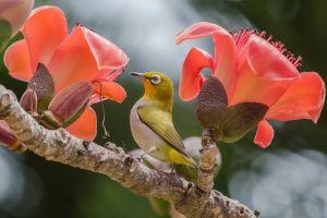 plants birds animals branch flowers