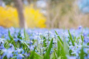 plants outdoors flowers blue flowers