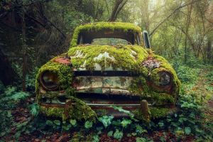 plants vehicle car wreck