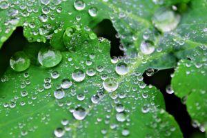 raindrop leaves water drops nature