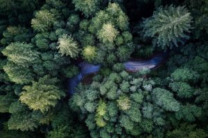 road aerial view outdoors plants trees