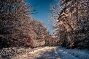 road dappled sunlight trees snow winter outdoors